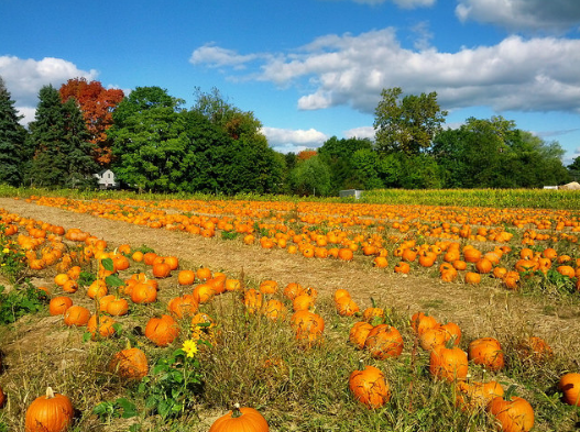 pumpkin_patch_fall_ga